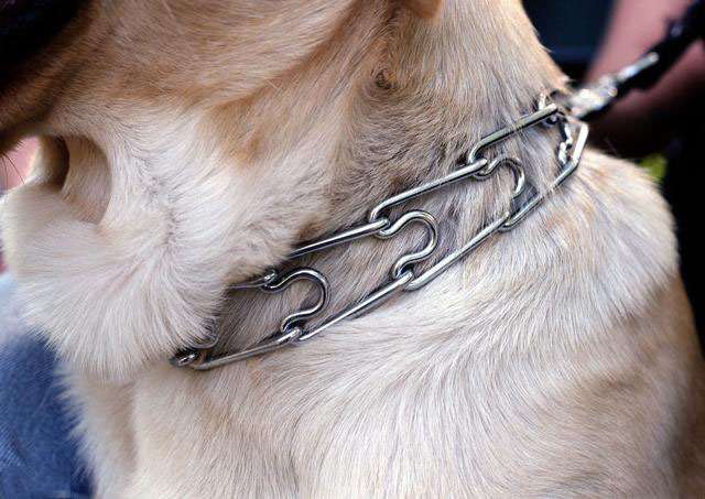 爱狗狗,不要对他做这些事情.jpg